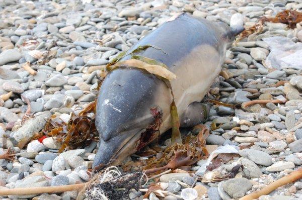 Rencontre bien triste ..un dauphin echouait sur la cote :-(