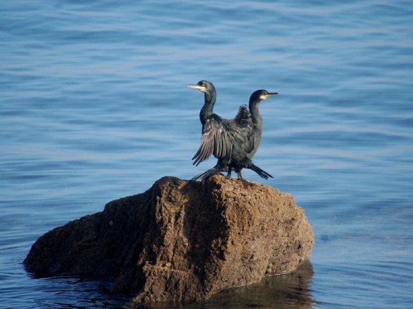 Euh ..je les adore.. je sais pas les pêcheurs :-)