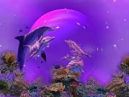 mon plu beau reve ses de nager avec les dauphin
