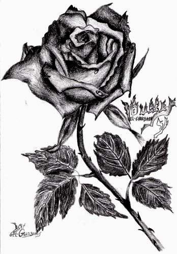 Rose noire blog de usf dessins - Roses dessins ...