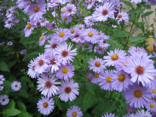 Fleurs de Printemps..
