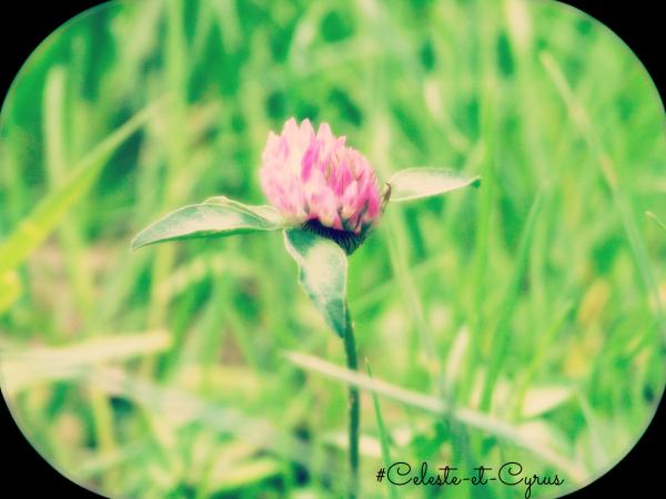 Photos de natures et de souvenirs.