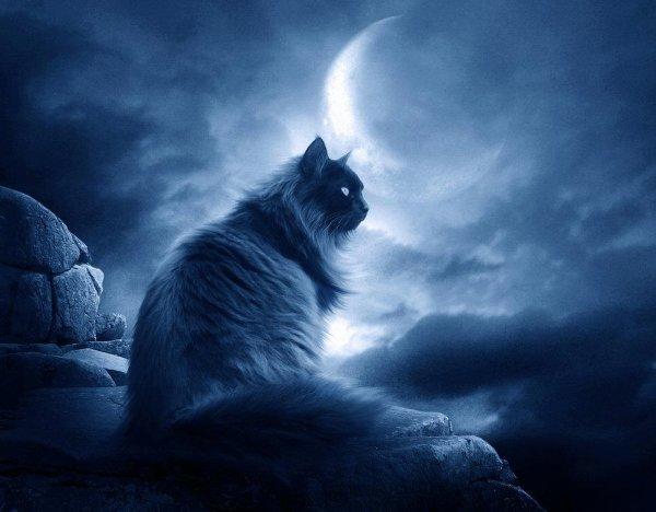 Douce nuit mes ami(e)s ! :D ♥