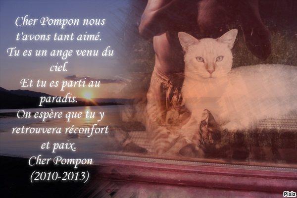 """Le chat de mon père """"Pompon"""".."""
