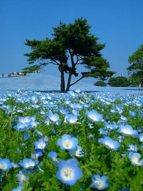 Un jardin de poésie ... ♥