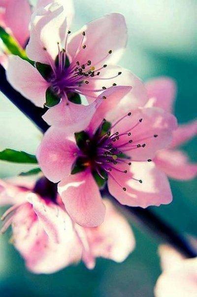 L'amour est un jardin de fleurs ...