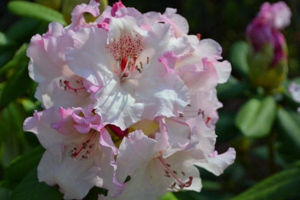fleurs diverses et variées