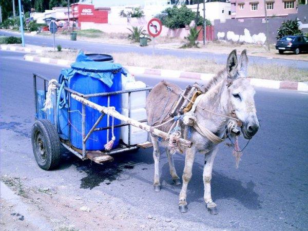 el jamar!!!petit taxi marocain!!!!