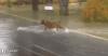 inondation   !!!