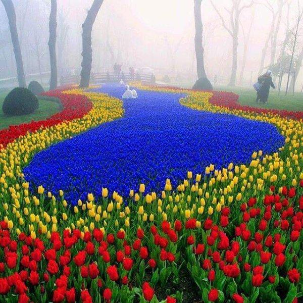 tulipes   !!!