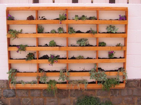 mur plante grasse deco allée