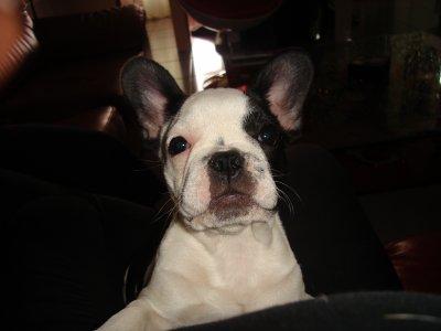 Daisy :)