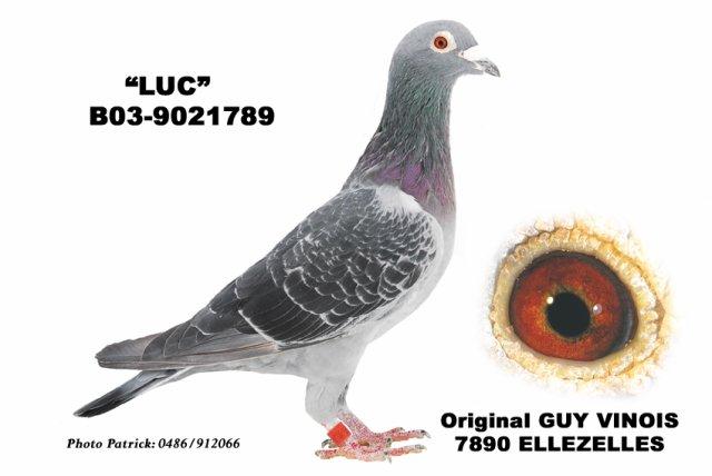 Blog de pigeonfievet-dhaeyer2009