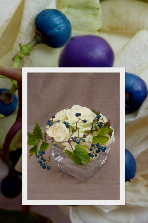 Roses et vigne vierge
