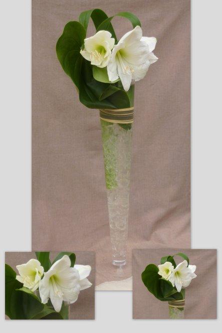 Articles de knautiedeschamps tagg s feuilles d 39 anthurium for Amaryllis pour noel