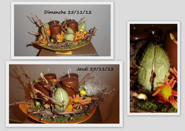 "Calendrier de L'Avent 2012   J- 5 "" Les gomphocarpus de Brugges"" """