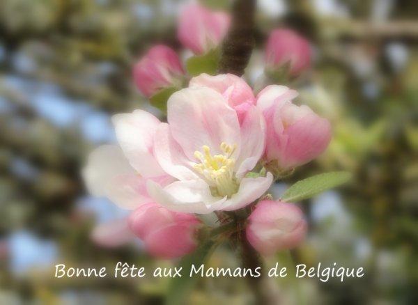 Pour les Mamans Belges