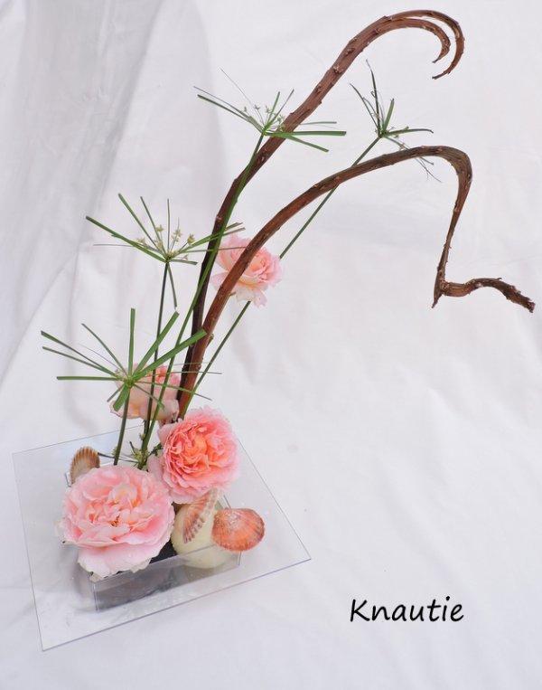 Saule séka et roses anglaises