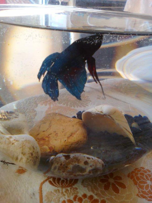 La colère du poisson !!!!