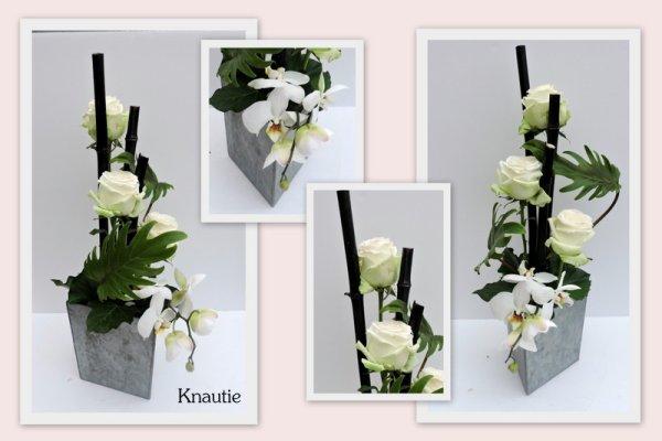 Roses et Phaleonopsis
