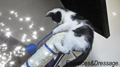 Exercices&Dressage.