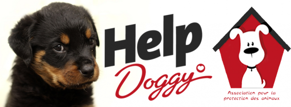 Notre association Help Doggy