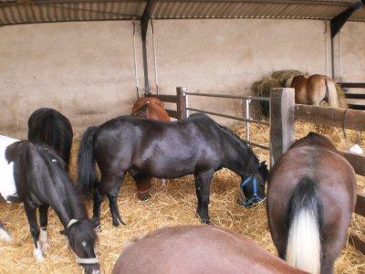 les poney