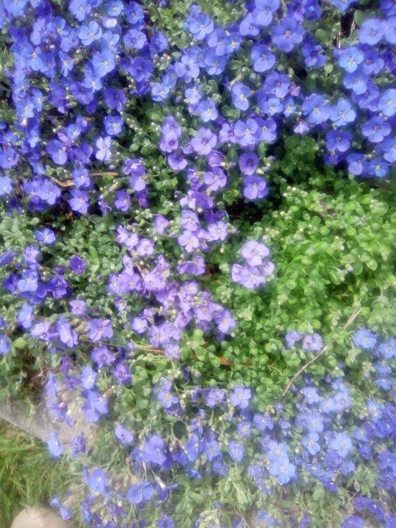 Mes premières fleurs dans mon jardin elle son jolie pour mes amis