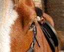 Photo de Mustang-6