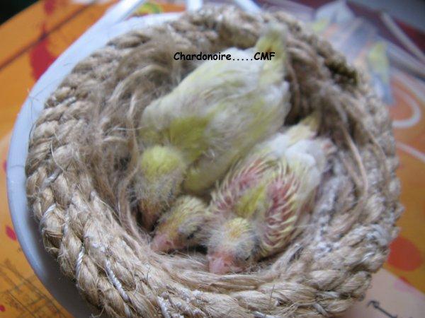 Sortir du nid