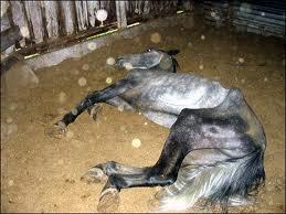 Un cheval c'est beau,mais le budget doit suivre avec...