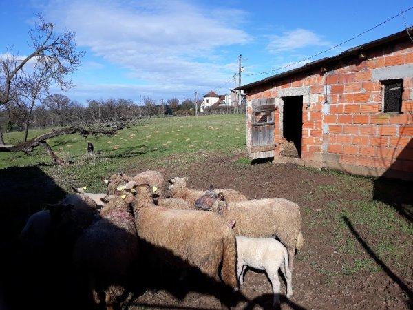 RANDO DES 3 CLOCHERS (SUITE)