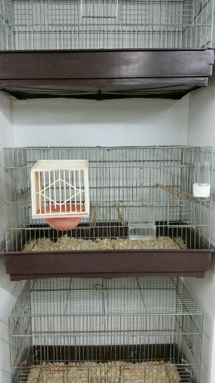 Cage d élevage complète  à vendre 15 ¤ pièce