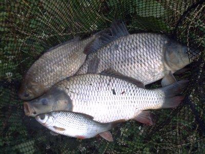Une pêche du matin carpes et  pour l'après midi petit pêche avec mon fils.