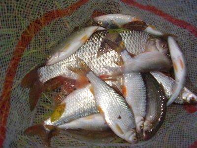une pêche du dimanche 6 septembre2009