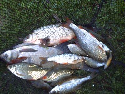 ma pêche préférer