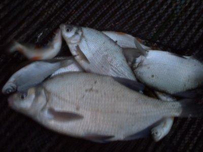 deux après midi de pêche