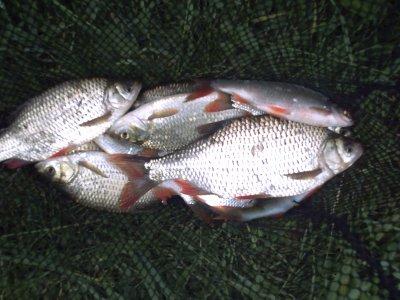 ma pêche prèférer