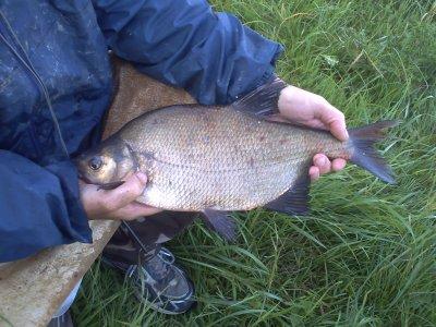 une pêche au feeder