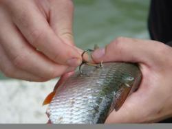 Pourquoi pêche-t-on ?
