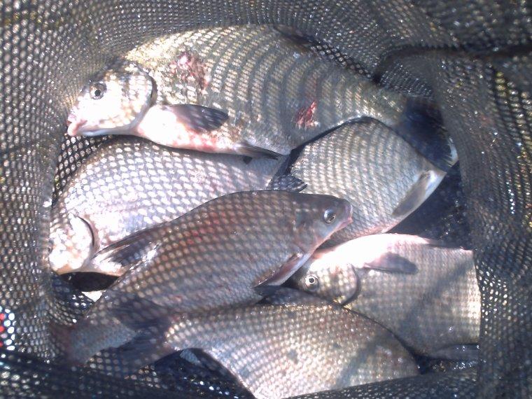 Savoir réfléchir pour la pêche