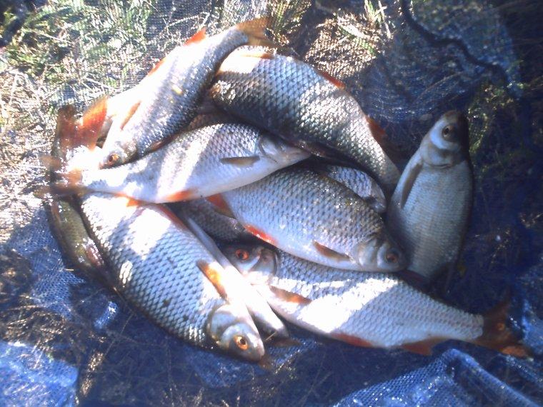 un mélange de pêche anglaise et de canne au coup