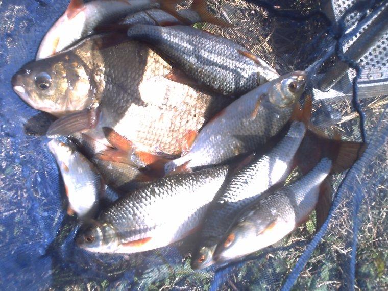 la pêche au coup sur la seine