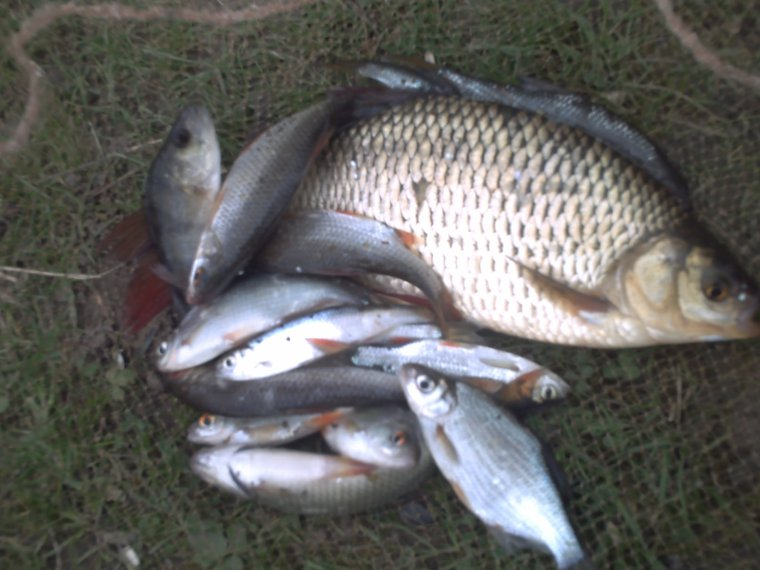 pêche a draveil