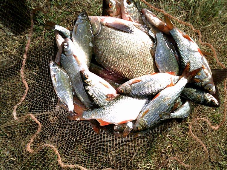 pêche au coup dans toute ses formes
