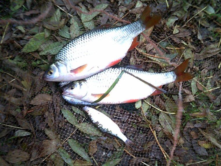 pêche dans un bras de la marne