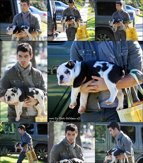 Le 28/11/2010 : Joe en balade avec Winston. Le 29/11/2010 : Joe arrivant chez sa chérie pour y apporté un sapin de noël.