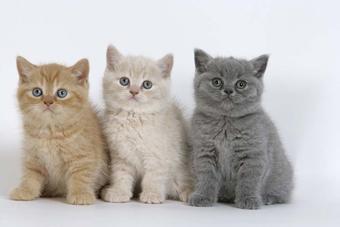 Arriver de mes trois chat sur Hell-monster
