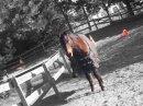 Photo de A-veendre-equitation-91