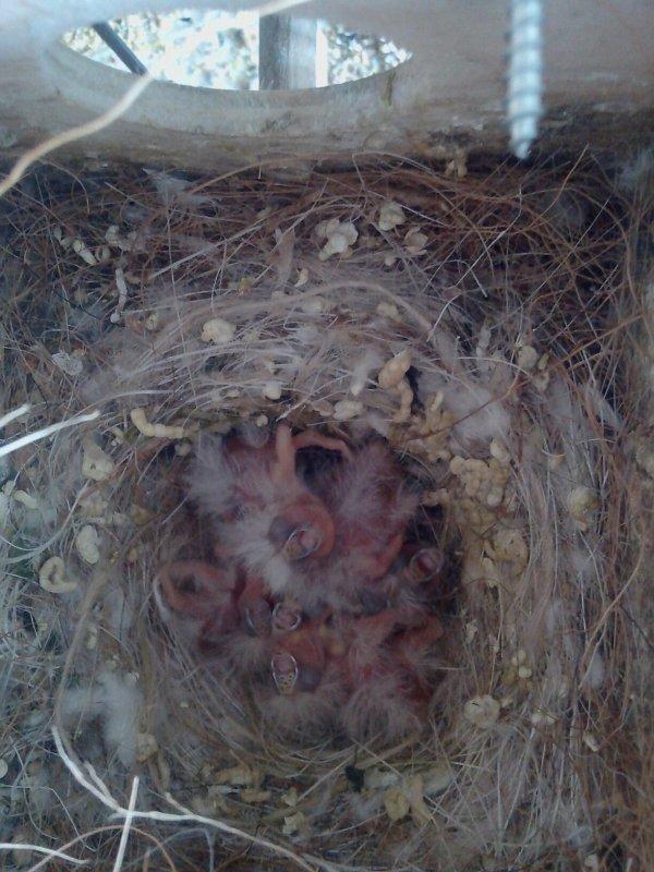 Voici les 6 jeunes du couple dos pale pastel, poitrine blanche née hier